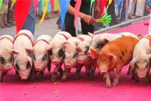 3月17日猪价:猪价轻微上涨,想要大涨或很难?