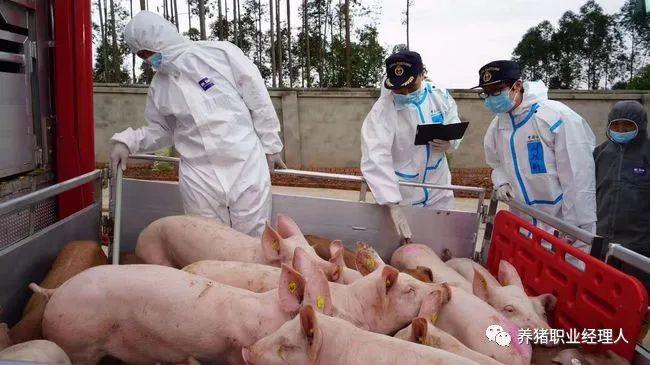 猪场的病原传播途径?