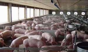 国家统计局:生猪产能持续恢复,猪肉价格持续下降13.6%