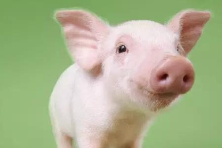 7月22日猪评:猪价红火上涨!幅度高,时间长,养猪行情拿来吧你!
