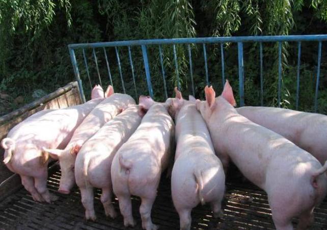 2021.7.22.后备二元母猪部分地区今日价格行情