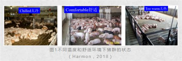 夏季猪场管理离不开抗应激药物