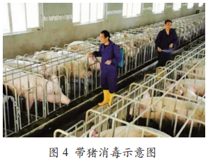 """猪场的消毒误区以及如何做到猪场的""""真消毒""""?"""