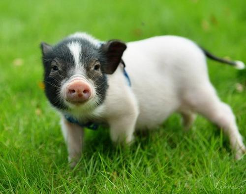 养了10年的猪,如今养猪场转型变养蛙场