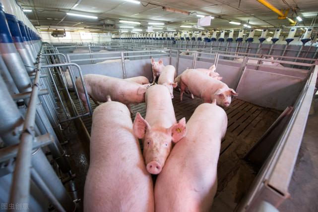 美国猪肉4元一斤,他们到底是怎么养猪的,为什么能这么便宜?
