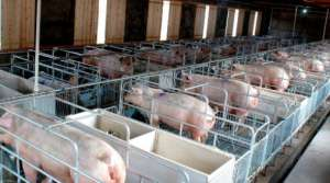 卓越的猪场有哪些管理理念