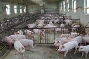 猪用针头使用对照表,附常见型号及长度
