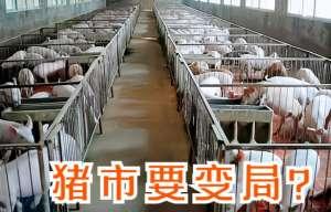出栏增加、库存丰足、养殖成本高涨 已把猪价打趴下了!